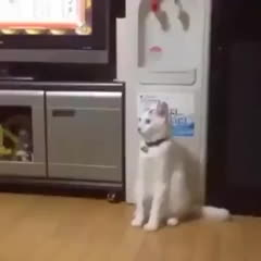StoppedWorking, Cat has successfully loaded human.exe GIFs