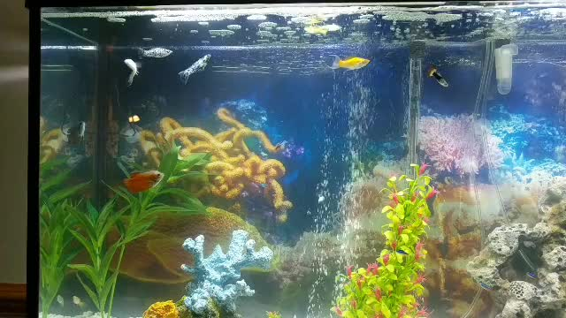 Watch and share 60 Gallon GIFs by Chris Leckness on Gfycat