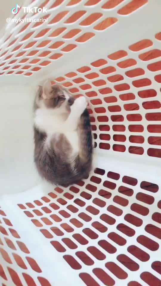 cats, foryou, foryoupage, tiktok,  #foryoupage #tiktok #foryou #cats #cat #pets #animals #luka #sammy GIFs