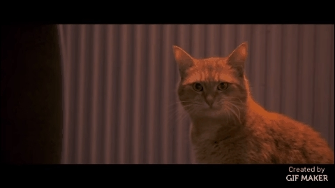 aww, cute, movies, A Street Cat Named Bob GIFs