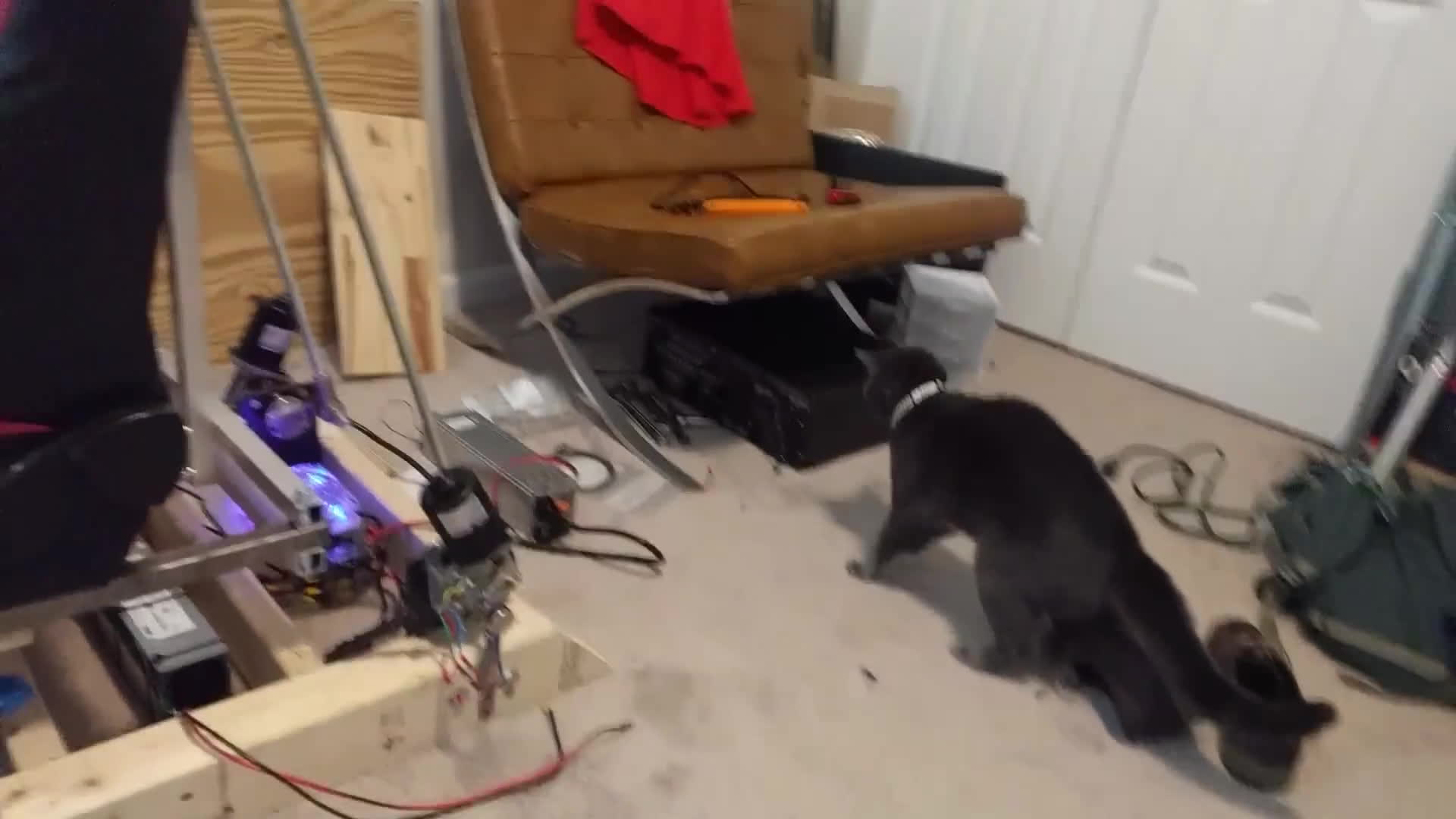 Sushi startled by miscellaneous electronics GIFs