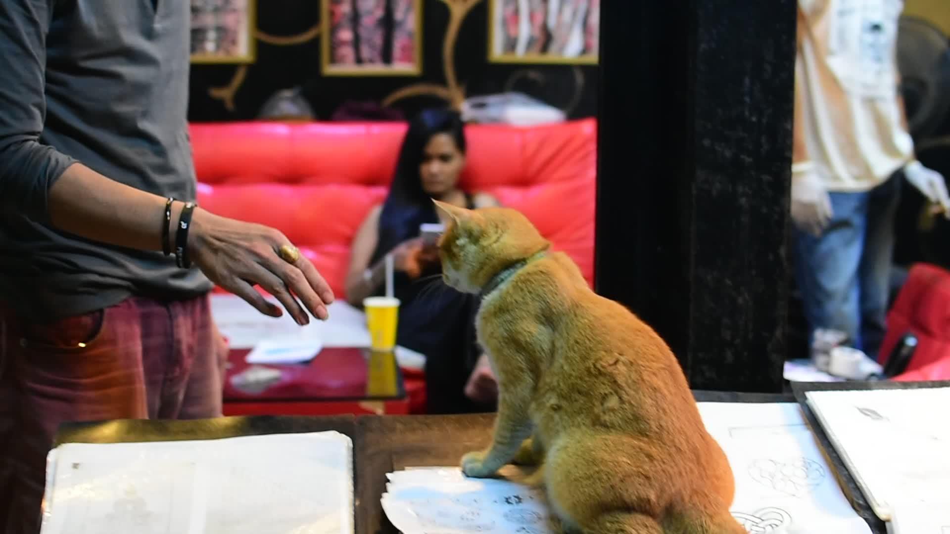 60fpsgfy, CatSlaps, catgifs, Cat Slapping hand GIFs