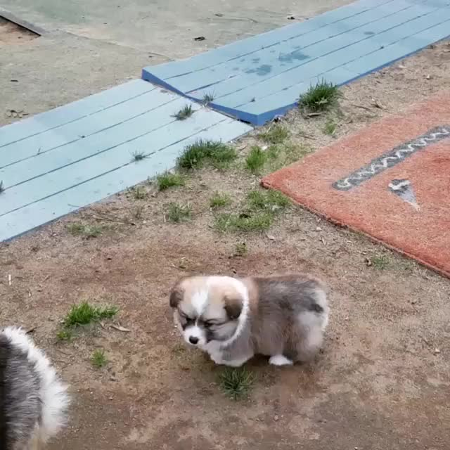 Watch and share Puppy GIFs and Cute GIFs by FarSizzle on Gfycat