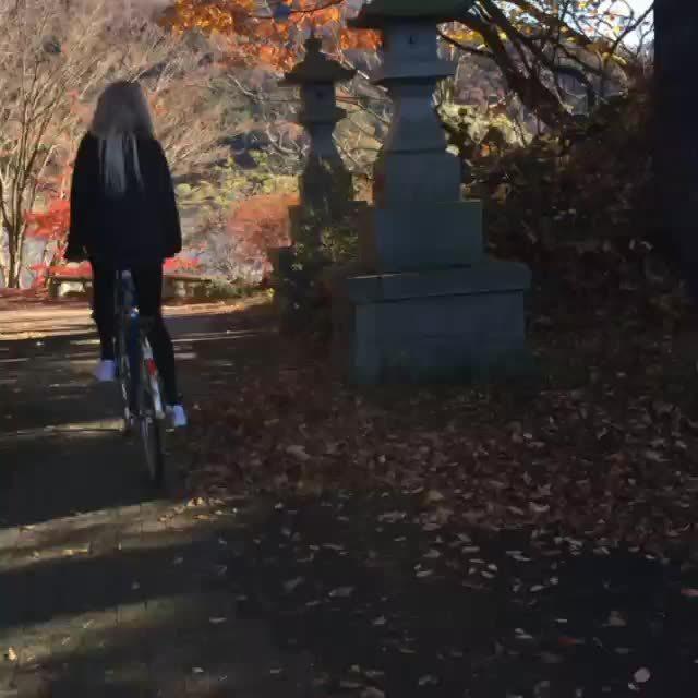 JapanTravel, travel, Bike ride in Kawaguchiko, Japan GIFs