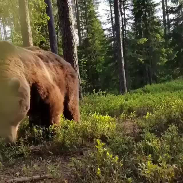 Watch and share Absolute Unit GIFs and Bear GIFs by tothetenthpower on Gfycat