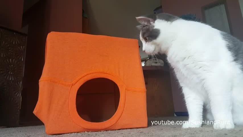 lifehacks, meow_irl, Homemade cat box with a t-shirt (reddit) GIFs