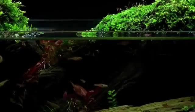 Aquascape Tutorial Guide By James Findley The Green Machine