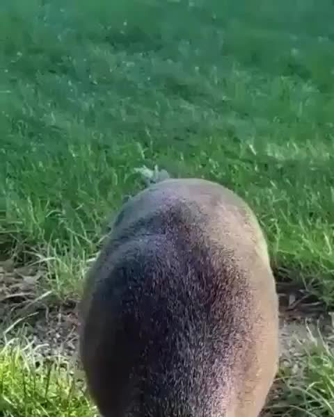 Watch and share Discover Wildlife GIFs by mayaxs on Gfycat