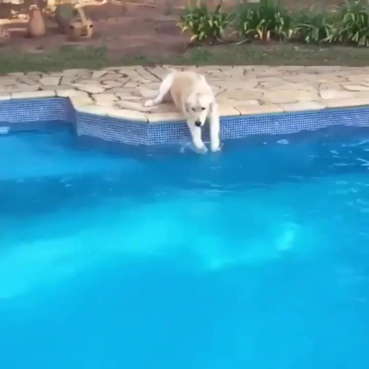 Pupper showing their friend how to swim properly GIFs
