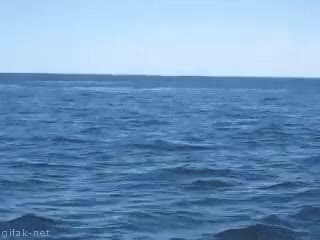 Watch and share Whale Jump GIFs on Gfycat
