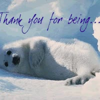 Watch Harp Seal GIF on Gfycat. Discover more related GIFs on Gfycat
