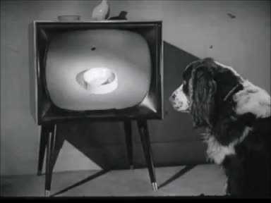 Watch TV Dog: Via Rally Dog Food Ad (1950s) Marc Rodriguez GIF by Marc Rodriguez (@marcrodriguez) on Gfycat. Discover more 1950s, ad, black and white, dog food, doggy, food, funny, marc rodriguez, perro, tv, tv dog, vintage, watching tv GIFs on Gfycat