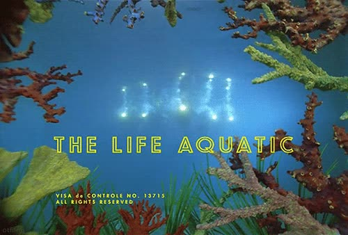 Watch and share The Life Aquatic With Steve Zissou Gif GIFs on Gfycat