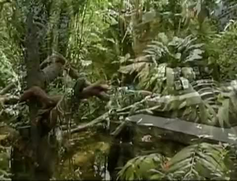 Watch and share Moody Gardens Rain Forest GIFs on Gfycat