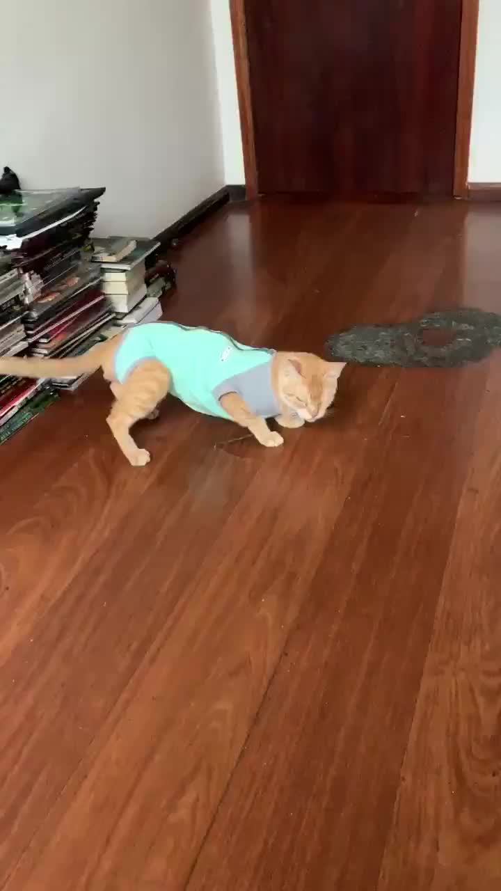 gato GIFs