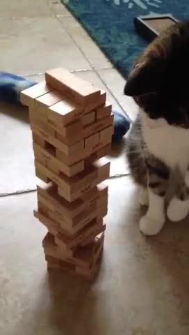 Watch and share Jenga GIFs and Cat GIFs by RespectMyAuthoriteh on Gfycat