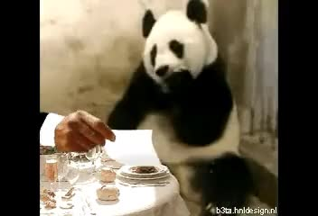 panda, sneezing, Sneezing Panda Bill GIFs