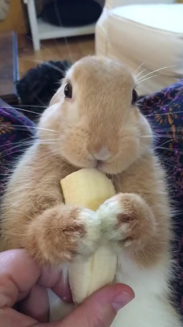 Прикольные гифки кролик
