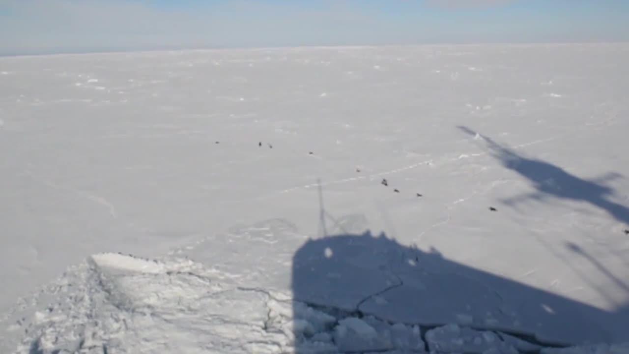 USA, military, militarygfys, Penguins run from USCG Polar Star GIFs