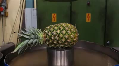 Watch Pineapple squirt GIF on Gfycat. Discover more askreddit, mariners GIFs on Gfycat