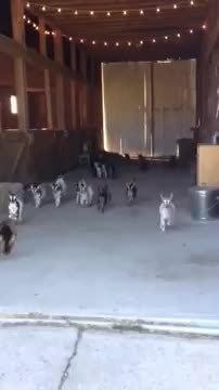 Goats! GIFs