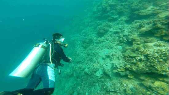 Summer Cruise, Scuba Diving GIFs