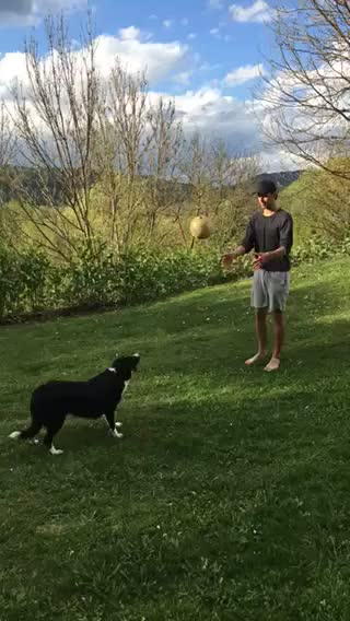 Watch and share Ballin With My Dog GIFs by veshlol on Gfycat