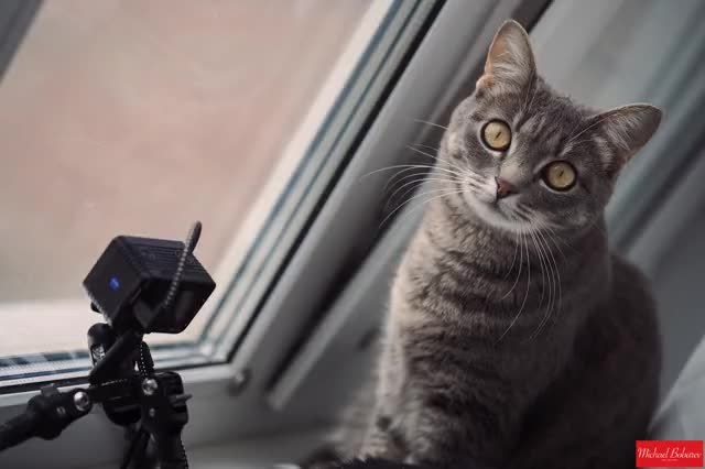 Watch DOPcat GIF by Michael Bobarev (@michaelbobarev) on Gfycat. Discover more captureonepro, directorofphotography, dop, dopcat, michaelbobarev, rx0, rx0m2, rx0mark2, sony, videoproduction, zeiss GIFs on Gfycat