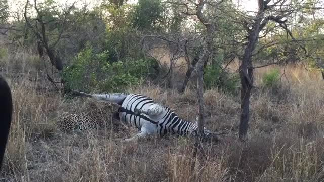 Watch and share National Park GIFs and Kruger Park GIFs on Gfycat