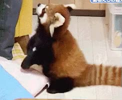 Watch I need this GIF by kartman on Gfycat. Discover more animalgifs, cakeforge, funnygifs GIFs on Gfycat