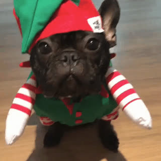 Santa's little helper • r/thisismylifenow GIFs