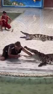 Watch and share Crocodile GIFs by julieeea on Gfycat