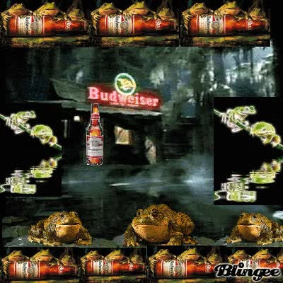 Watch and share Budweiser Frogs GIFs on Gfycat