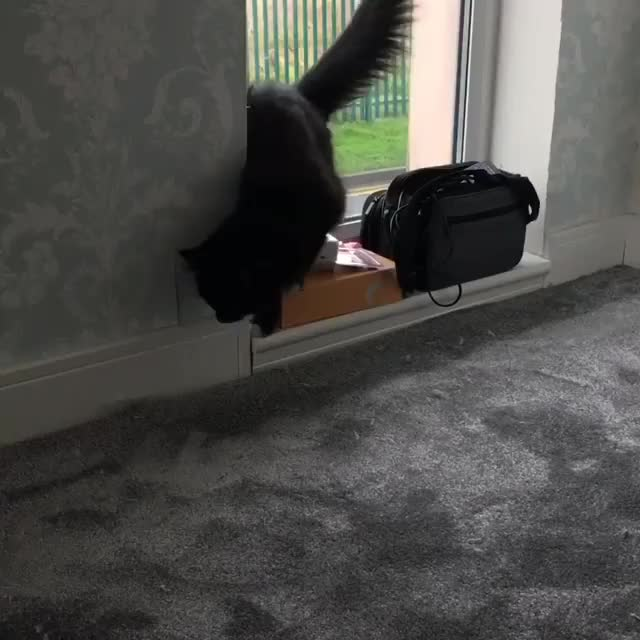 Watch and share Cat GIFs by FarSizzle on Gfycat