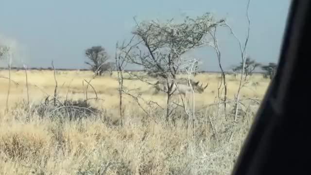 Watch and share Rhino Attacks GIFs on Gfycat