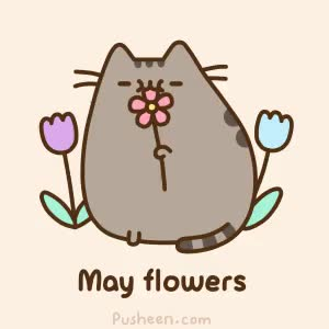 Watch and share Pusheen Pics GIFs on Gfycat