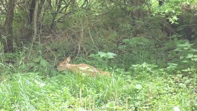 Watch and share A Fawn Stretching GIFs on Gfycat
