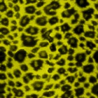 Watch and share Animated Leopard Print Background 001 GIFs on Gfycat