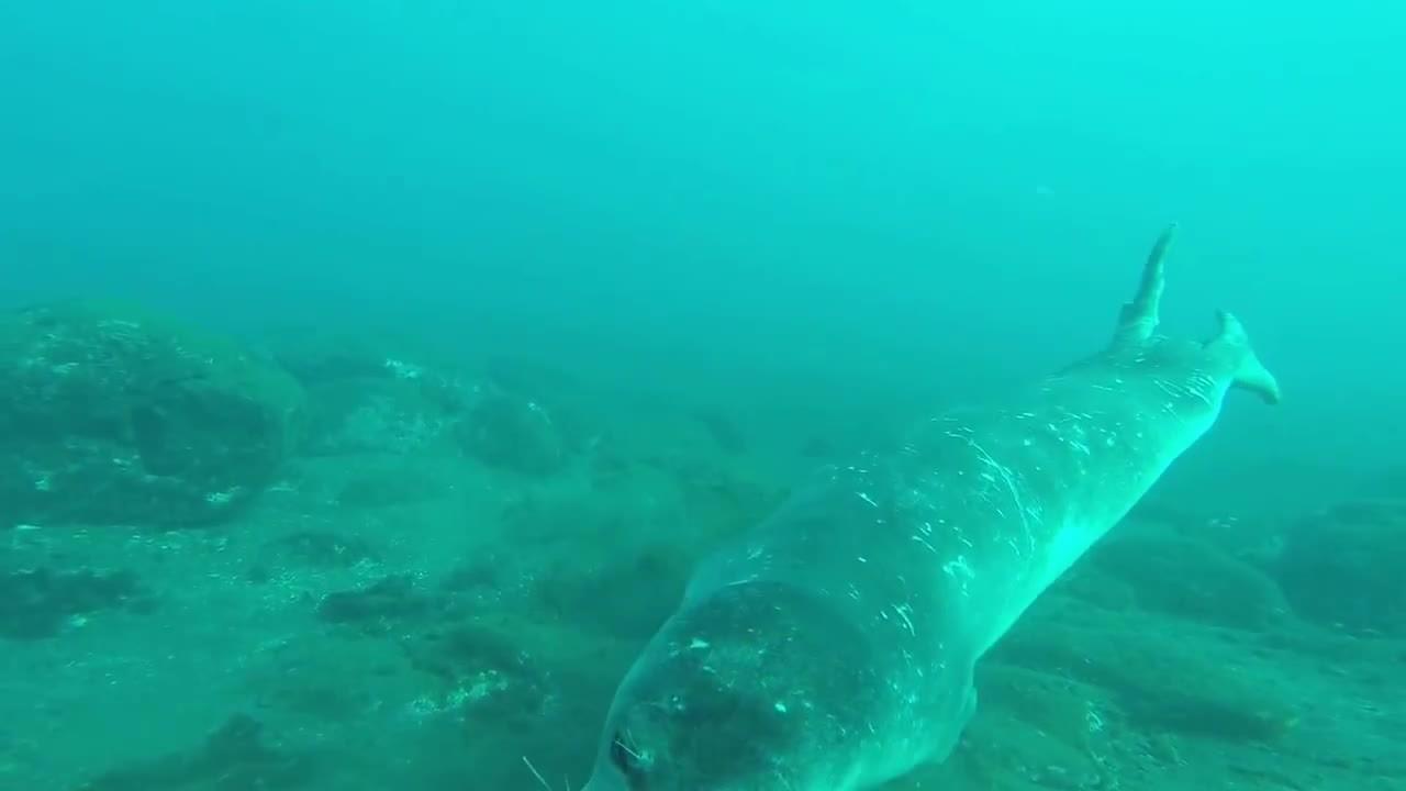 interestingasfuck, scuba, visita de um amigo especial  (lobo marinho ) GIFs