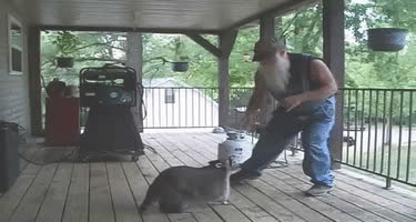 coon and hillbilly dancing GIFs
