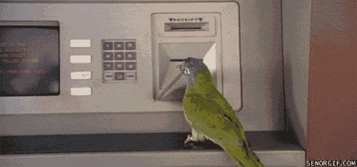 birbs, The bird is the w GIFs