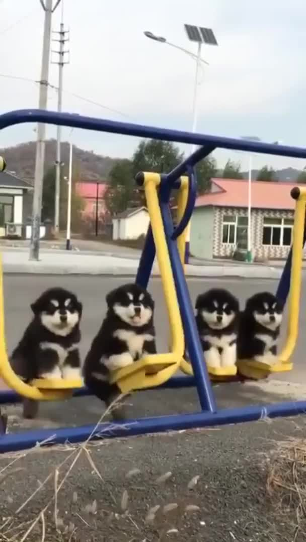 Watch and share Four Fluffy Boys Sitting On A Swing GIFs by Thomas Gray on Gfycat