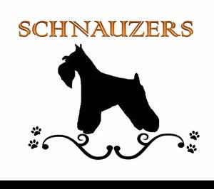 Watch and share Schnauzers Rule Animated Pagespeed Ce Max GIFs on Gfycat