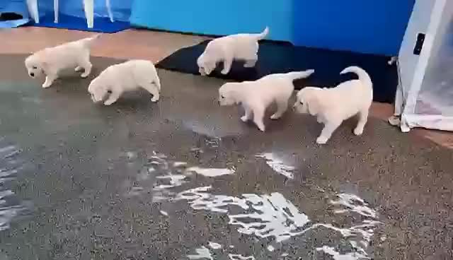 Watch aww GIF on Gfycat. Discover more puppy GIFs on Gfycat