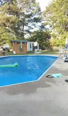 Watch HMF while I dive in! GIF on Gfycat. Discover more fatguysvsgravity GIFs on Gfycat