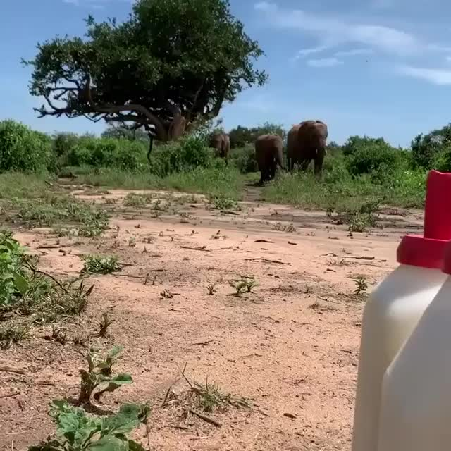 Watch and share Elephant GIFs by vani  on Gfycat