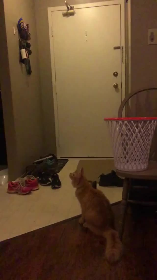 Watch and share Cat GIFs by cheddarcheesecat on Gfycat