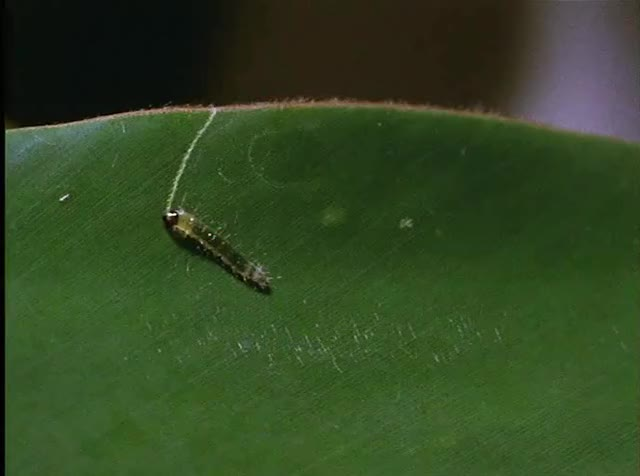 Watch and share Caterpillar Leaf Protection GIFs by bippidyboppidyboo4u on Gfycat