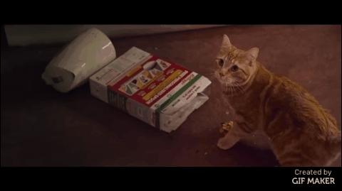 aww, highqualitygifs, movies, A Street Cat Named Bob GIFs