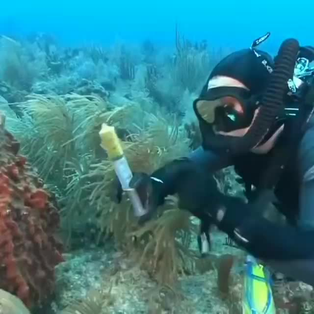 Watch and share Marine Sponge Filter Feeding Made Visible GIFs by PrviAxiom on Gfycat